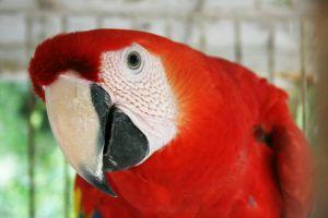 Macaw,coolza,sxc