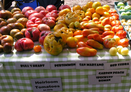 Colorful Heirloom Tomatoes1