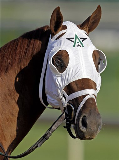 Kentucky Derby Horses10