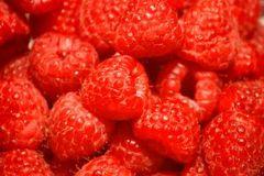 Raspberriesfishmonksxc_2